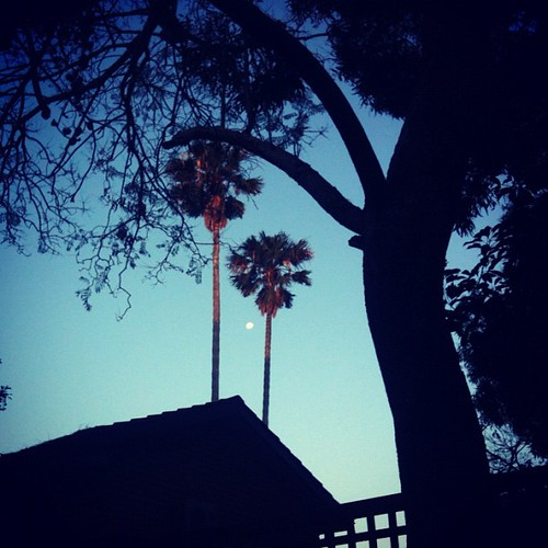 Between two palms by sohotrightnow