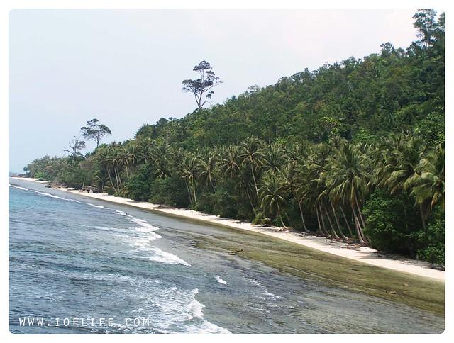 jejeran pohon kelapa Sikuai Padang