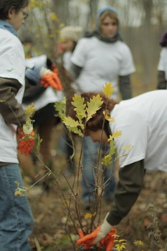 Voluntari la plantarea Mega Copacul