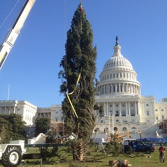 Christmas Tree in place on West Front Lawn