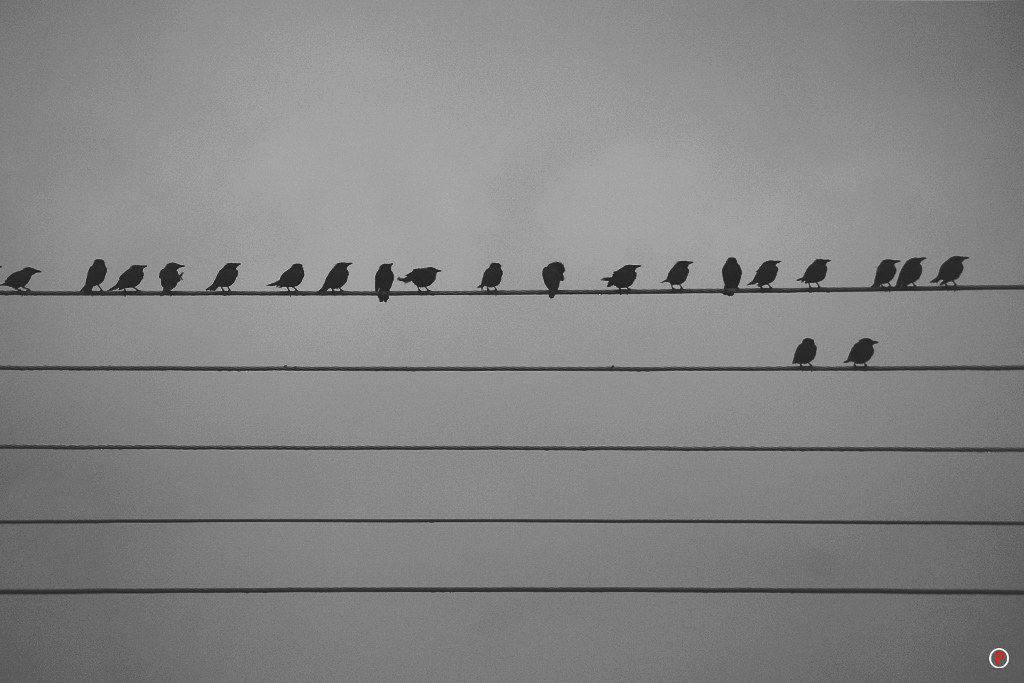 Rainy Day - Birdies