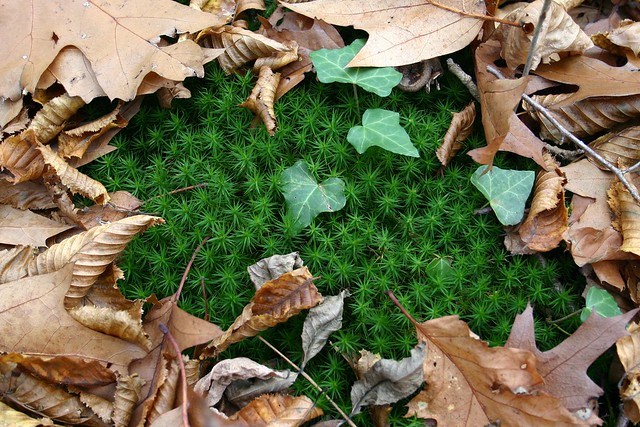 Moss macro