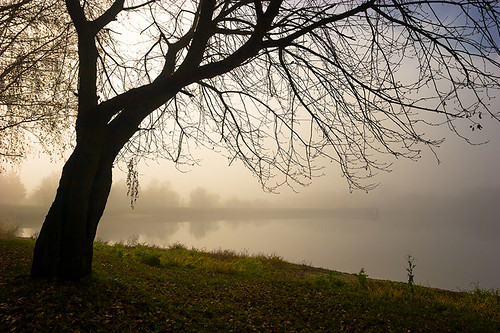 blue autumn sky mist lake tree green 20d grass leaves sunshine yellow horizontal canon landscape eos hungary fallen zala