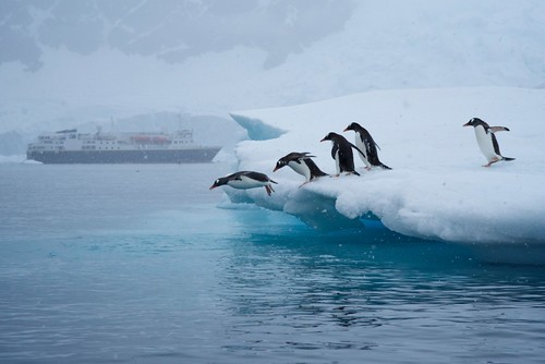 Penguins Diving In, Antarctica by JC Richardson