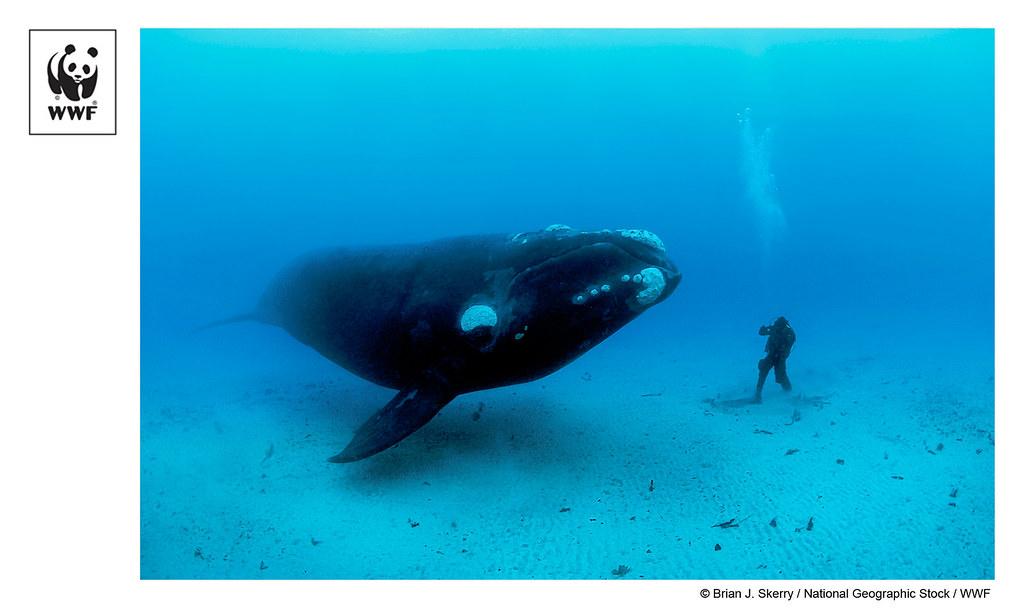 найдовші водні тварини - все про тварин