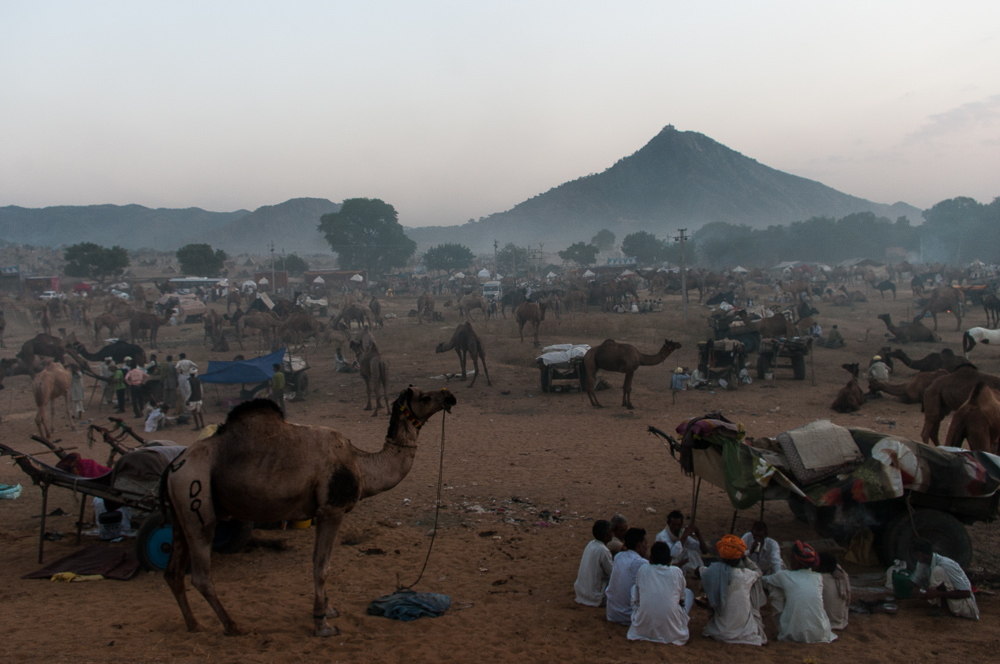 View on Camel Fair in Pushkar