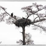 Eagles+Nest