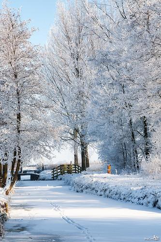 bridge trees winter snow cold holland ice canon fence bomen gate frost ditch hoarfrost sneeuw nederland thenetherlands freezing brug poort ripe hek ijs koud zuidholland alblasserdam rijp canoneos5d canonef24105mmf4lisusm bracom bramvanbroekhoven