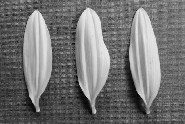Simple Garden Ideas >> Pudendum | Flickr - Photo Sharing!