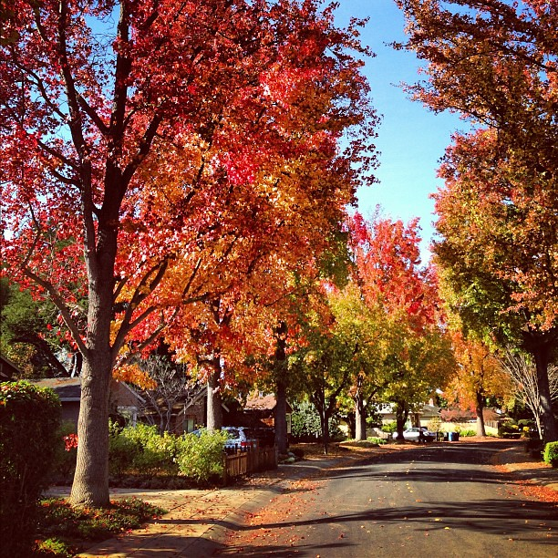 Autumn in Palo Alto