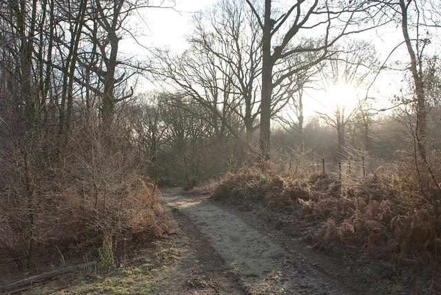 DSC_5353 Frosty woodland
