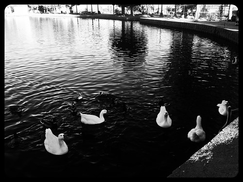 A Shot in the Park  (Processed with Orca Filter) iPhonography + flickr App by nabila4art