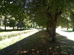 La rangée d arbres est bien plus grande en vrai. C est un bon endroit pour un shooting photo en plus du lavoir présent a côté. Beau village de France !           - Allée ombragée arbres alignés ruisseaux pont