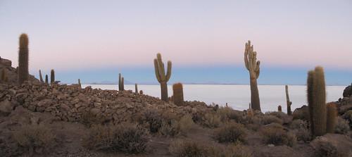 Le Salar d'Uyuni: la Isla Incahuasi et ses cactus