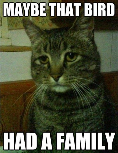 Depressed Cat Has Made a Huge Mistake