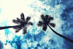 [フリー画像素材] 自然風景, 空, 樹木, 青空, 椰子・ヤシ ID:201211172000