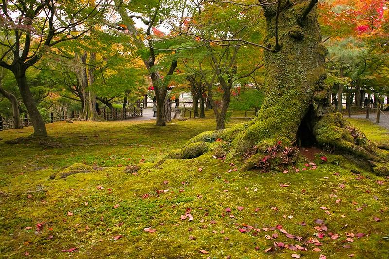東福寺 #5