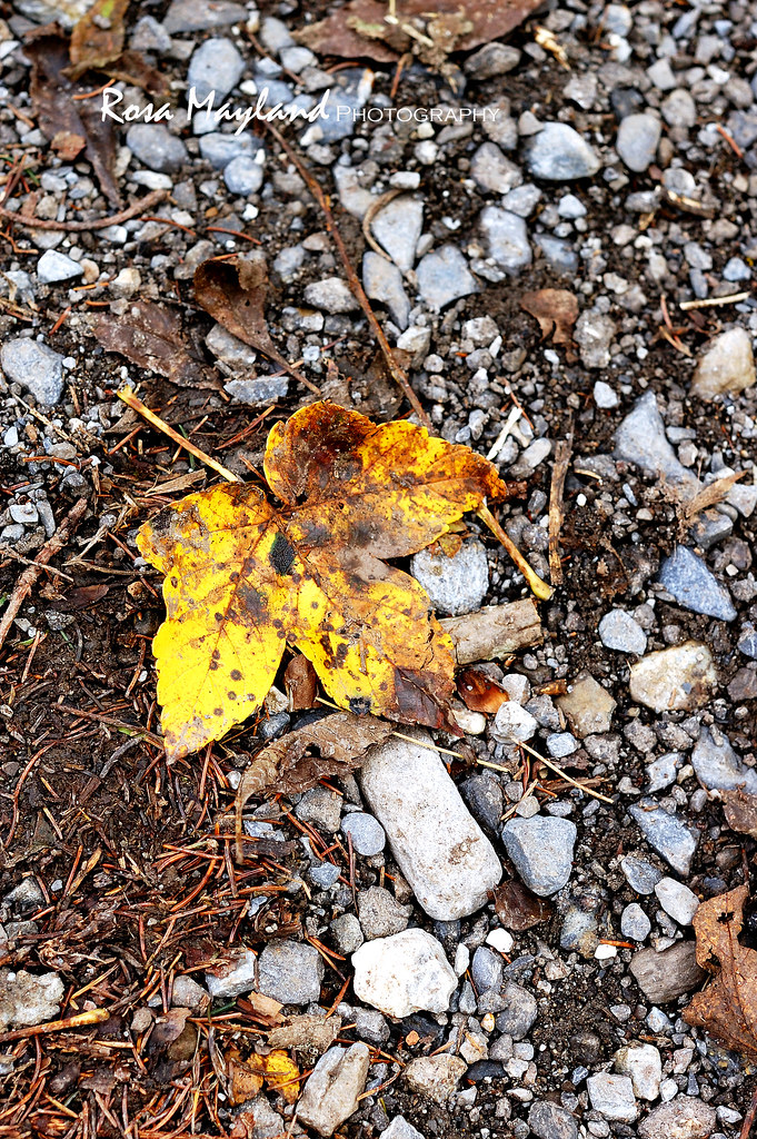 Tikka Massala Autumn Leaves Lenk 2 1 bis
