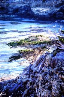 Point Lobos State Reserve, California, USA
