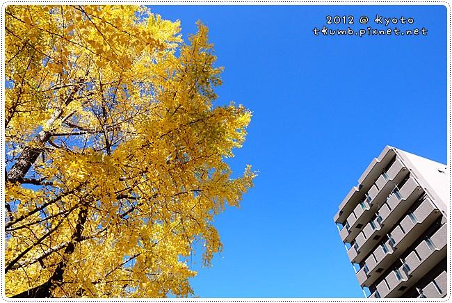 銀杏 (5).jpg