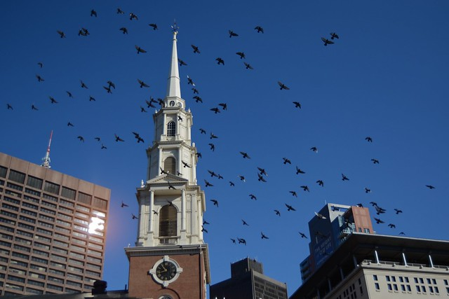 Downtown Pigeons