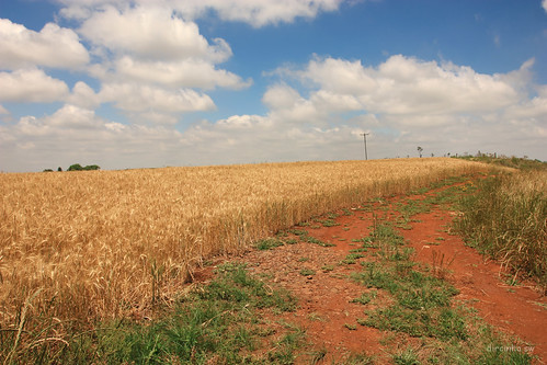 brazil brasil canon riograndedosul trigo cloudyday dircinha paisagemdosul brasilemimagens gtyok plantingwheat