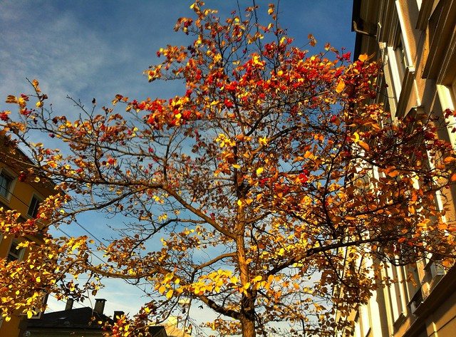 Autumn colors in town