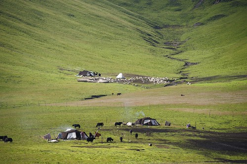 Nomad tents, Sheep, and Yak all scattered around this landscape, Tibet 2012 by reurinkjan
