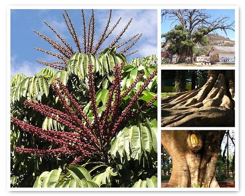 Favorite Trees in Oaxaca @bighugelabs