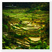 Bali - Rice Terraces by TOONMAN_blchin