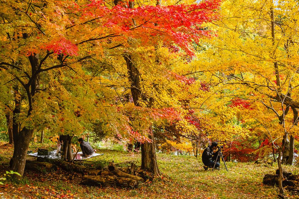 Saijosan Park