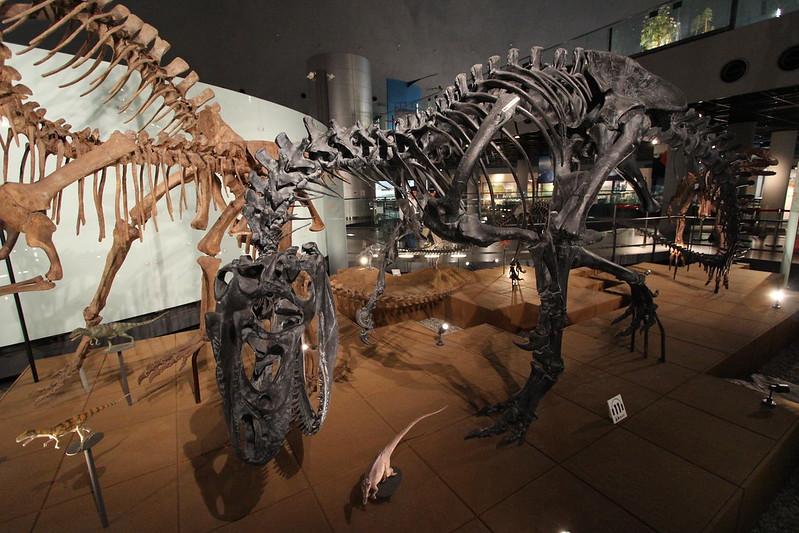 福井県立恐竜博物館 骨格模型 その5