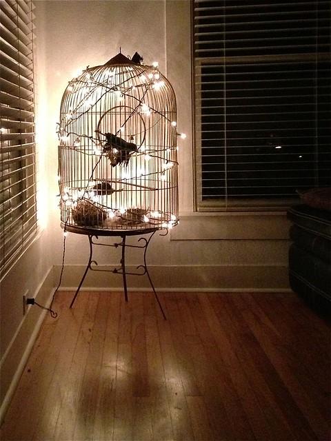 birdcage lit