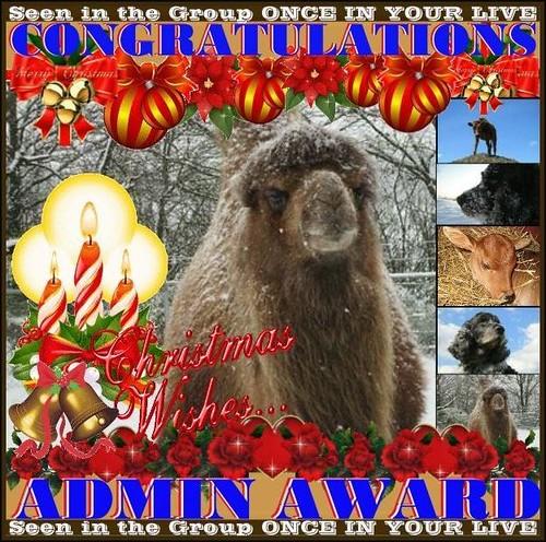 Award by excellentzebu1050