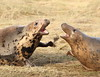 Fighting Females