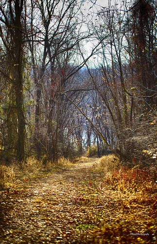 trees winter lake water woods nik libertyreservoir canonef100mmf28lmacroisusm hdrefexpro2 colorefexpro4