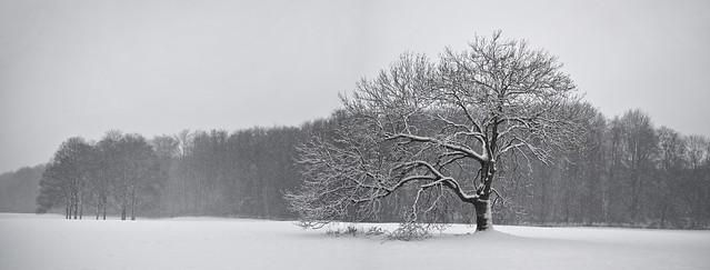 2012 December - First Snow
