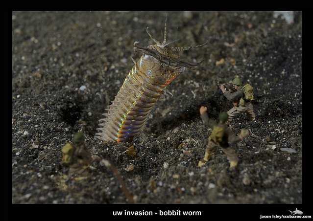 uw invasion - bobbit worm