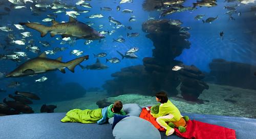 palma aquarium canguro tiburon (2)