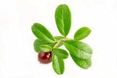 Fresh lingonberries with some leaves isolated on w…