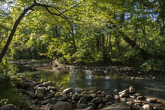 Pequannock River_4876