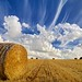Small photo of Straw Bale