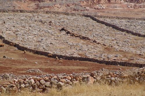 敘利亞的旱災。(圖:CharlesFred)