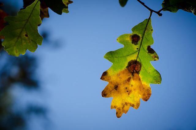 Halfway to Autumn