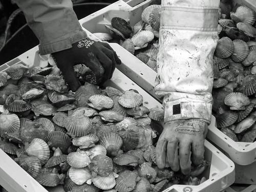 """Imagen de la Serie fotográfica """"Marisqueiros de Arousa"""""""