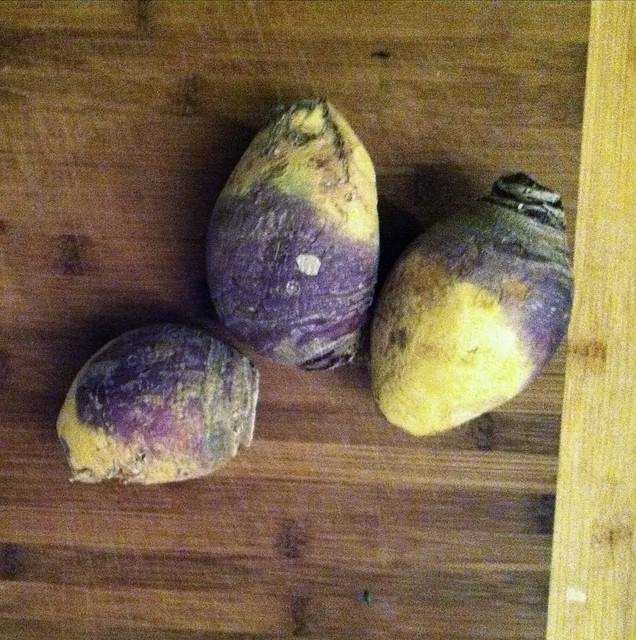 Recipe: Fermented Turnip/ Rutabaga Kraut Turnip Rutabaga November