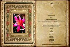 Lectura Apocalipsis 11,4-12. Obra Padre Cotallo