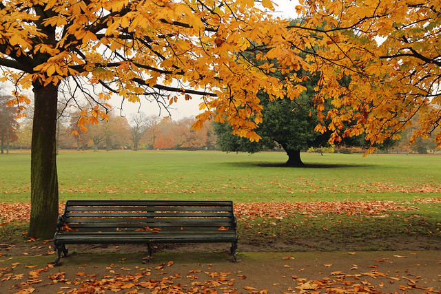 Bench in autumnal Greenwich Park