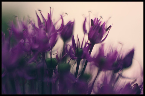 salto florale by andrè t.