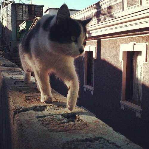 Gato porteño en acción by Miradas Compartidas